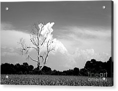 Cotton Candy Tree - Clarksdale Mississippi Acrylic Print