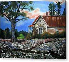 Cotton Fields Back Home Acrylic Print