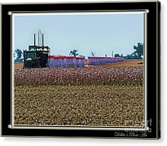 Cotton Harvest Acrylic Print by Debbie Portwood