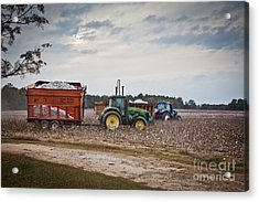 Cotton Harvest With Machinery In Cotton Field Acrylic Print