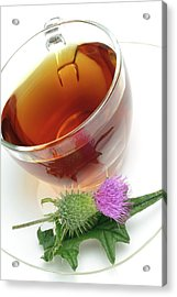 Cotton Thistle Herbal Tea Acrylic Print by Bildagentur-online/th Foto/science Photo Library