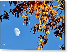 Cottonwood Moon Acrylic Print by Jan Davies