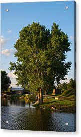 Cottonwood Acrylic Print