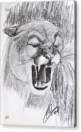 Cougar 2 Acrylic Print