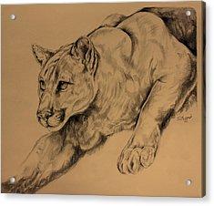 Cougar Acrylic Print by Derrick Higgins