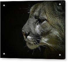 Cougar Acrylic Print by Ernie Echols