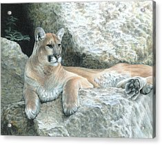 Cougar Haven Acrylic Print