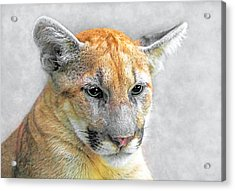 Cougar Acrylic Print by Marion Johnson
