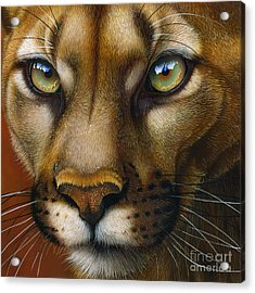 Cougar October 2011 Acrylic Print by Jurek Zamoyski
