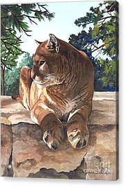 Cougar Outlook Acrylic Print