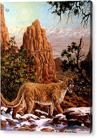 Cougar Acrylic Print by W  Scott Fenton
