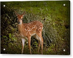 Could It Be Bambi Acrylic Print by Linda Segerson