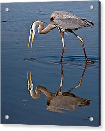 Could That Be How I Really Look Acrylic Print by Geraldine Alexander