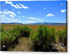 Country Boy  Acrylic Print by Tim Rice