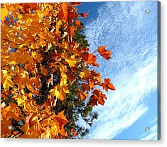 Country Color 30 Acrylic Print