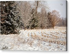 Country Contentment Acrylic Print