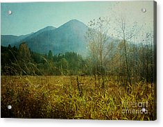 Acrylic Print featuring the photograph Country Drive by Sylvia Cook