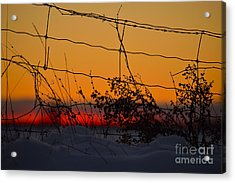 Country Fence Acrylic Print