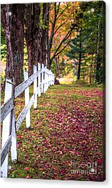 Country Lane Fall Foliage Vermont Acrylic Print by Edward Fielding