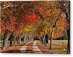 Acrylic Print featuring the photograph Country Lane In Autumn by Jerry Gammon