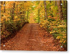 Country Lane In Autumn Acrylic Print by Matt Dobson