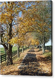 Country Lane Acrylic Print by Roger Potts