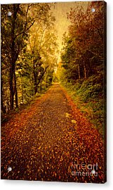 Country Lane V2 Acrylic Print by Adrian Evans
