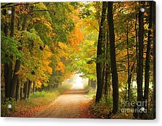 Country Road In Autumn Acrylic Print by Terri Gostola