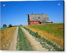 Country Road In Saskatchewan Acrylic Print by Buddy Mays
