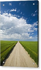 Country Road Through Grain Fields Acrylic Print by Dave Reede