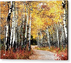 Country Roads Acrylic Print by Steven Reed