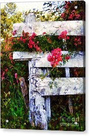 Country Rose On A Fence 2 Acrylic Print by Janine Riley