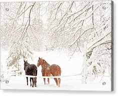 Country Snow Acrylic Print by Cheryl Baxter