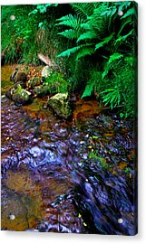 Country Stream Acrylic Print