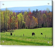 Acrylic Print featuring the photograph Countryside In Spring by Kathryn Meyer