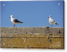 Couple Of Seagulls On A Wall Acrylic Print by Sami Sarkis