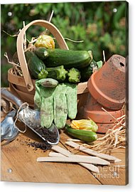 Courgette Basket With Garden Tools Acrylic Print by Amanda Elwell