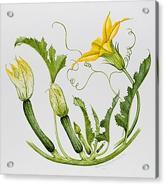 Courgettes Acrylic Print by Sally Crosthwaite