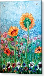 Courting Sunflowers Acrylic Print
