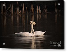 Courtship Painting Acrylic Print by John Edwards