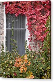 Covered Window Acrylic Print by Margaret McDermott