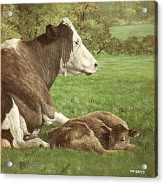 Cow And Calf In Field Acrylic Print