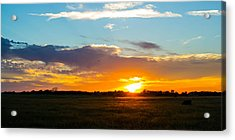 Cow At Sunset Acrylic Print