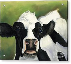 Cow Closeup Acrylic Print by Charlotte Yealey