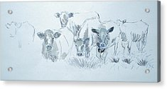 Cow Drawing Acrylic Print