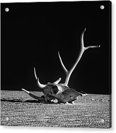 Cow Skull And Antlers Acrylic Print