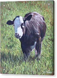 Cow In Grass Acrylic Print by Martin Davey