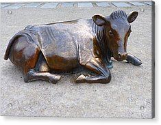 Acrylic Print featuring the photograph Cow In The City by Menega Sabidussi