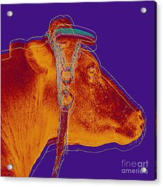 Cow Pop Art Acrylic Print