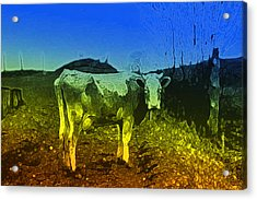 Acrylic Print featuring the digital art Cow On Lsd by Cathy Anderson